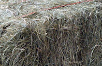 Coastal Bermuda Square Bales - J & J Hay Farms, Ball Ground, GA