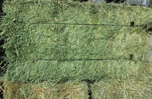 Organic Hay For Sale at Cherokee Feed & Seed