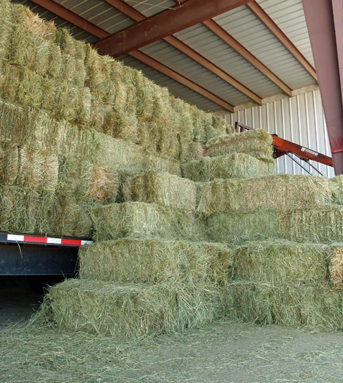 Stacked square hay bales at Cherokee Feed and Seed, Ball Ground, GA