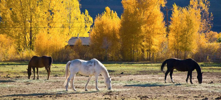 Four Autumn Feeding Facts for Horses