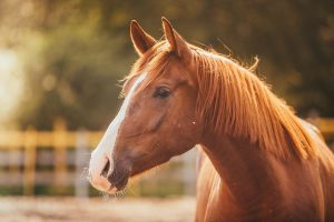 Horse Hay: Understanding Sugar and Starch Content