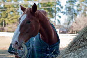 Benefits of Late-Season Hay for Horses
