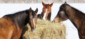 Winter Hay Supplies for Horses