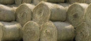 Keep Stored Hay in Good Condition