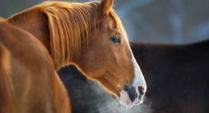 Feed Horses in the Winter