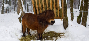 Evaluating Hay Feeders for Horses