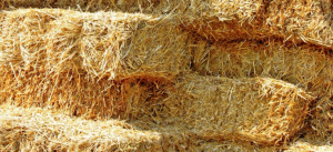 Straw Bedding