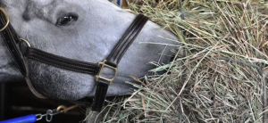 Evaluation of Hay for Horses