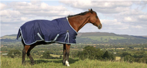 Fall Maintenance for Healthy Winter Horses: A horse wearing a winter blanket stands in a field